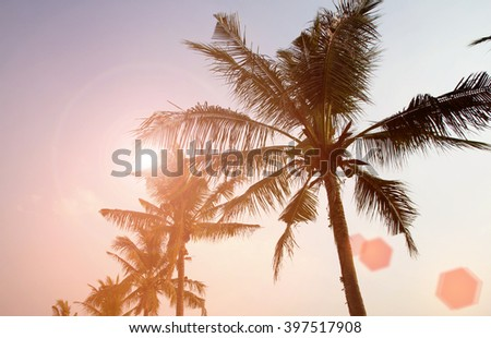 Coconut tree with sunlight summer sky bright background