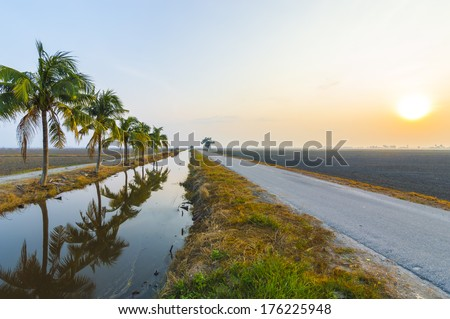 Coconut tree with sunrise background at the empty field - stock photo