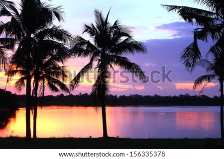 coconut tree with the sunset in pool  - stock photo