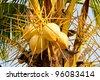 Coconut trees - stock photo