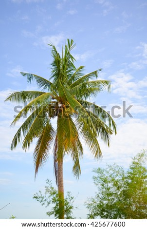 coconut trees 1