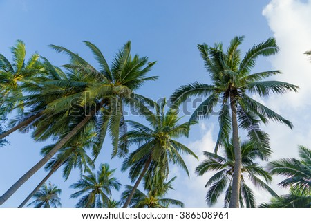 Coconut trees against blue sky