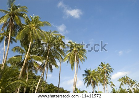 Coconut trees along beach - stock photo