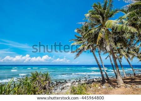 Coconut trees and beach at Phu Quy Island, Binh Thuan, Vietnam