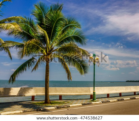 Coconut trees and street lamp along the road by the sea