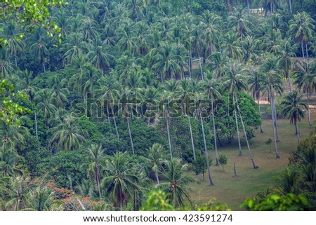 Coconut trees high trunk Hip stem with a mature height of about 18 meters high from the big and long. He began at the age of 5-6 years longevity yield  of  80 years.