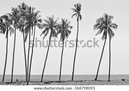 Coconut trees in black and white at the beach of south china sea