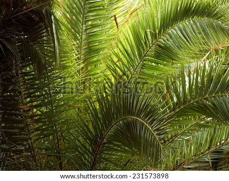 Coconut trees in tropical climate on vacation