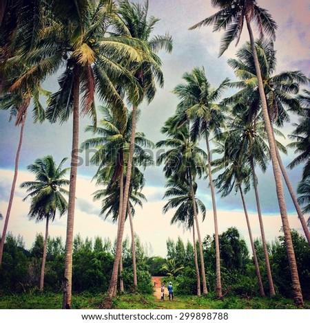 Coconut trees - instagram filter - stock photo