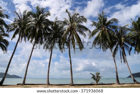 Coconut Trees on the beach Beautiful Background.