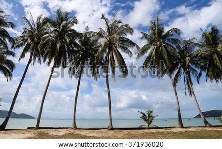 Coconut Trees on the beach Beautiful.The landscape photography of orange sun setting into the ocean in the sea on koh samui Thailand