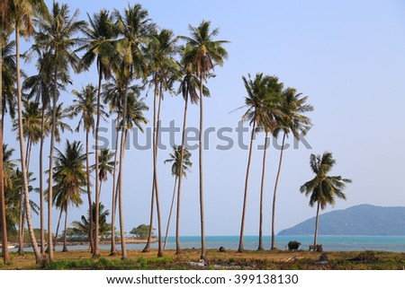Coconut Trees on the beach Beautiful.The landscape photography of orange sun setting into the ocean in the sea on koh samui  Surat Thani, Thailand.