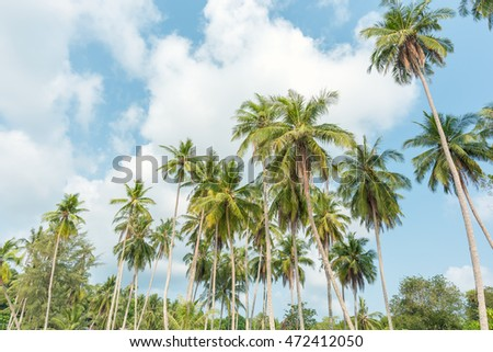 coconut trees on tropical beach