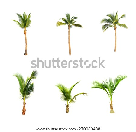 Coconut trees on white background  - stock photo