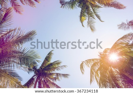 coconut trees over clear sky on day noon light with filter colored. - stock photo