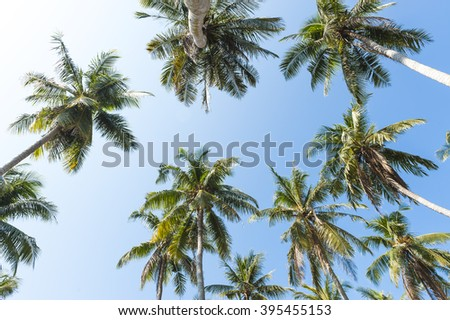 coconut trees,  palm with blue sky