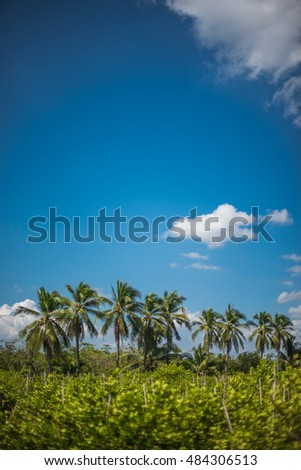 coconut trees with blue sky