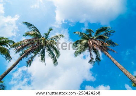 Coconut trees with blue sky background. - stock photo