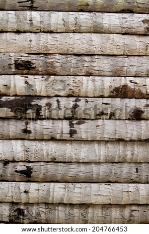 Coconut wall texture