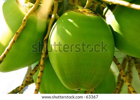 Coconuts 3 - stock photo
