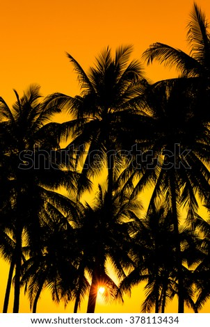 coconuts silhouettes with tropical sunset