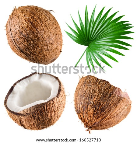 Coconuts with palm leaf on white background. Collection - stock photo