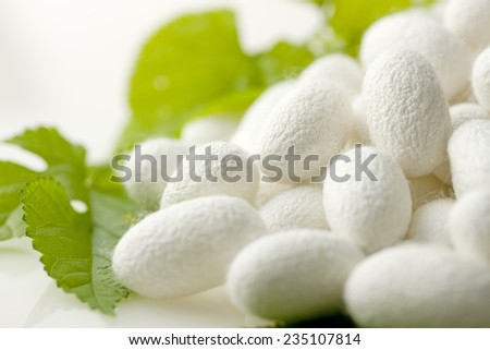 Cocoon and Mulberry leaves - stock photo