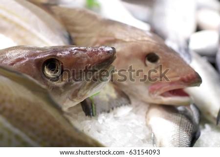 Codfish - stock photo