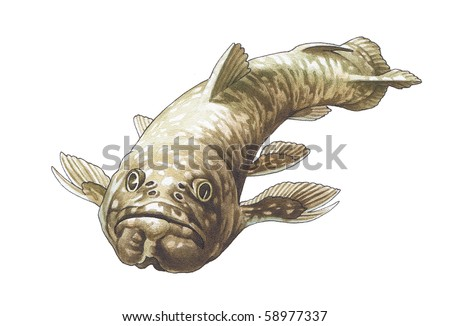 Coelacanth. Latimeria. The prehistoric fish who has lived up to now. - stock photo