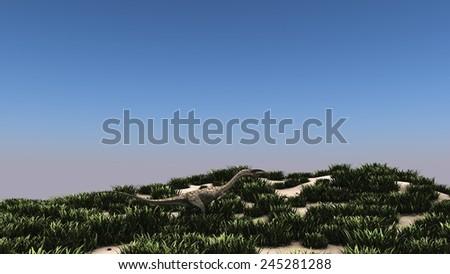 coelophysis in grassland - stock photo