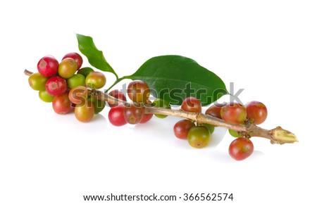 Coffee bean on white background - stock photo