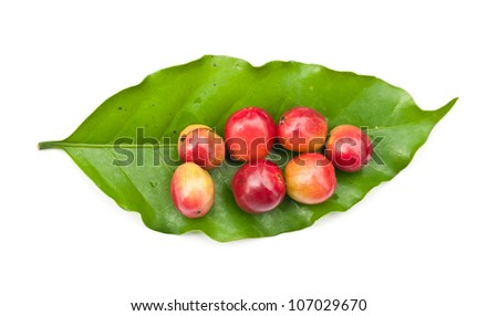 coffee beans and coffee leaf on white background. - stock photo