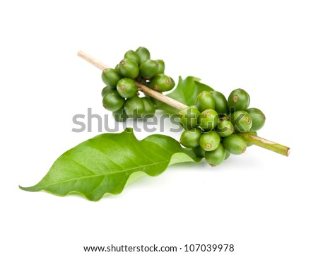 coffee beans and leaf on white background. - stock photo