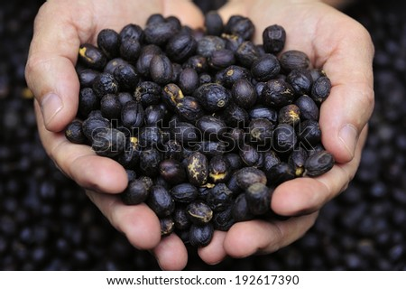coffee beans in farmerÃ?Â??s hand - stock photo