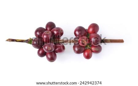 coffee beans on white background. - stock photo