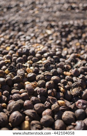 Coffee - closeup dried coffee bean texture, roasted Coffee Bean. selective focus - stock photo