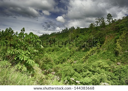 Coffee grows on a terraced hillside in Costa Rica. - stock photo