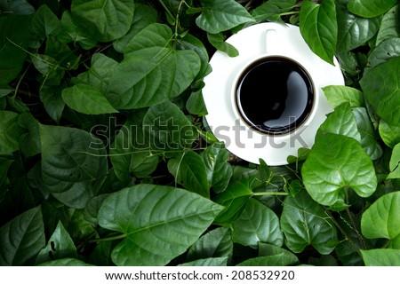 coffee in the  Garden - stock photo