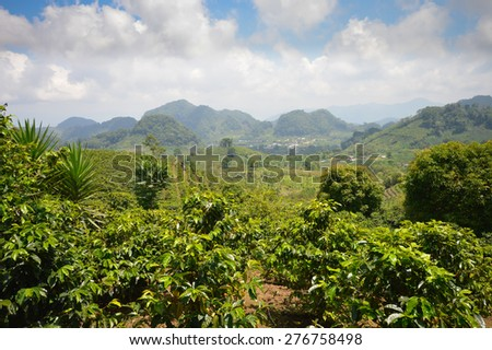 Coffee plantations in the highlands of western Honduras by the Santa Barbara National Park