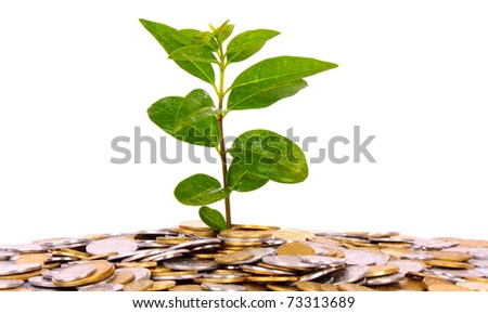 coin money with green leaf growingcoin money with green leaf growing