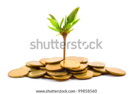 Coins and plant on white - stock photo