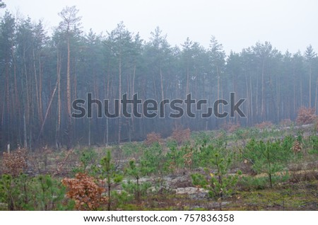 cold autumn forest