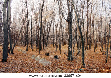Cold autumn in wild forest. Golden leafs. Fall - stock photo