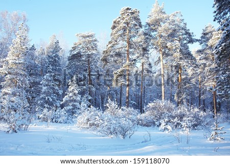cold day in the snowy winter forest - stock photo