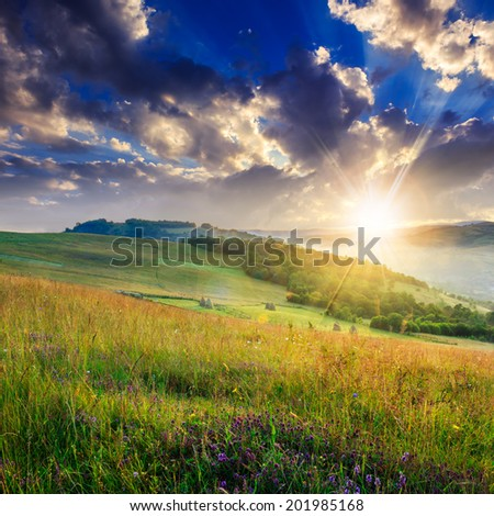 cold fog on meadow with grass and flowers in the mountains near the forest at sunset