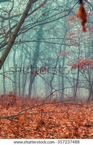 Cold foggy woodland and warm orange fallen leaves - stock photo