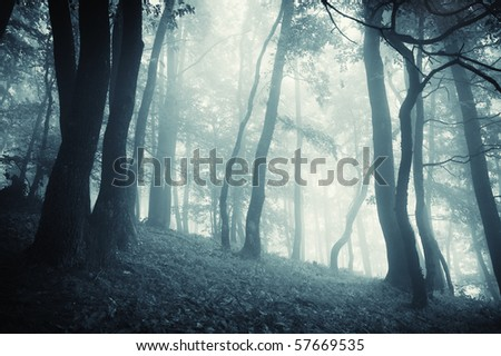 cold forest with fog at evening