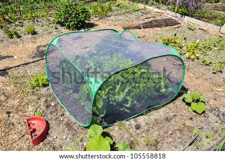 Cold frame or mini greenhouse - stock photo