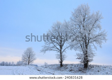 Cold frosty landscape in winter with single trees at the road - stock photo