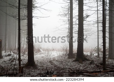 cold misty forest powdered with snow - stock photo